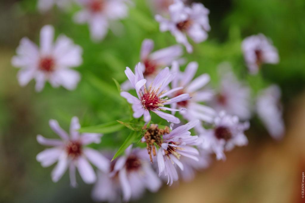 Rive Gauche Maze Chambres d'hotes fleurs