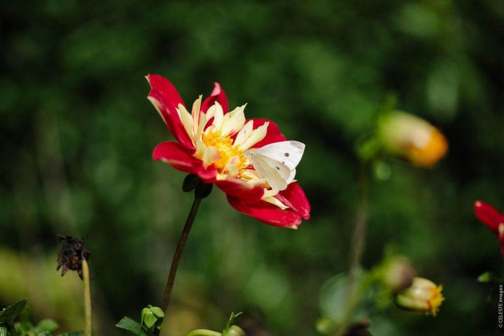 Rive Gauche Maze Chambres d'hotes papillon